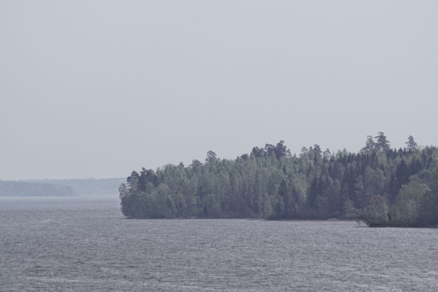 Niklas Storm Maj 2018 Tree Sky Landscape Pinaceae Pine Woodland Pine Tree Fog Mist WoodLand Calm The Great Outdoors - 2018 EyeEm Awards
