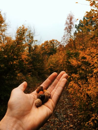 Cropped hand of person holding nuts in forest during autumn
