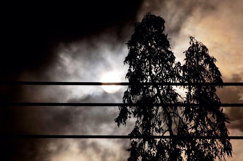 The Sun Cloud -