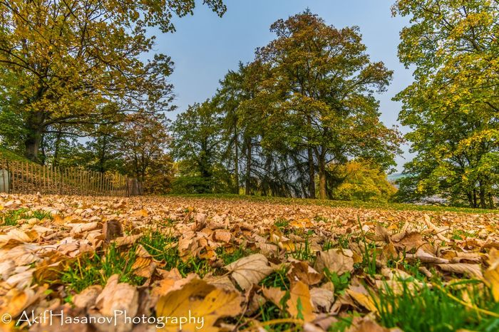 Namur Belgium Autumn Beauty In Nature Forest Growth Leaf Nature No People Outdoors Sky Tranquility Tree
