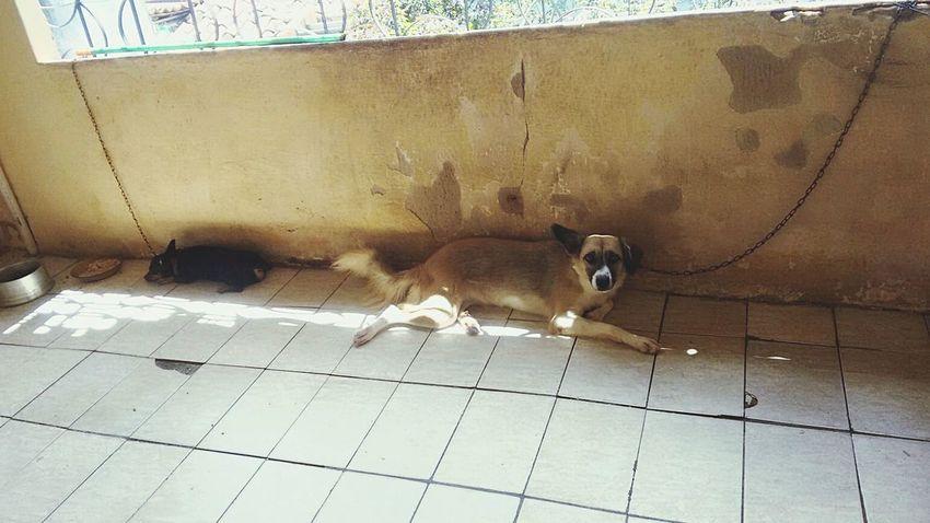 My dog 😍💘