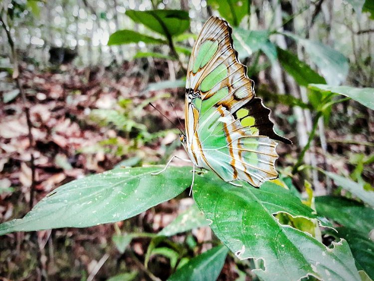 Nature Animal Themes Green Color Animals In The Wild Beauty In Nature Plant Telephoto Telefonografia Nature_perfection Nature_collection Fragility Nature Animal_collection Animal Photography One Animal Mariposa Butterfly Butterfly Collection