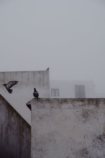 Birds perching on wall against building
