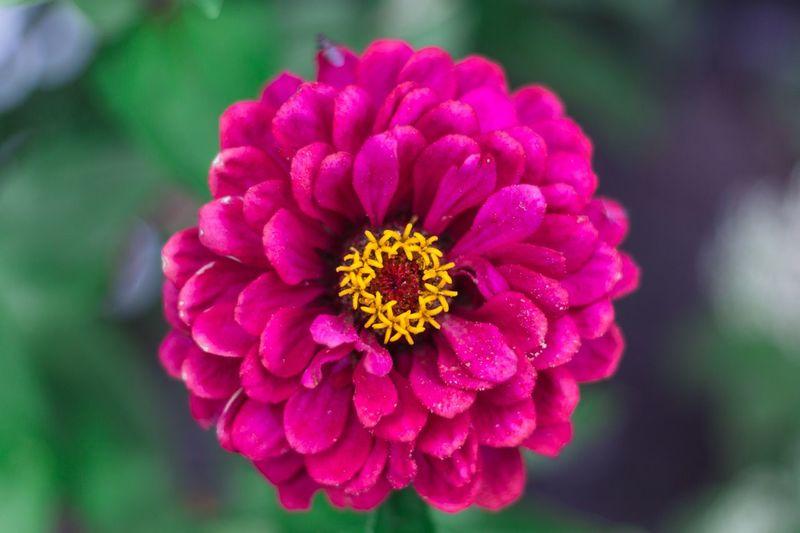 Flower Pink Color Beauty In Nature Nature Blume Blüte Garten