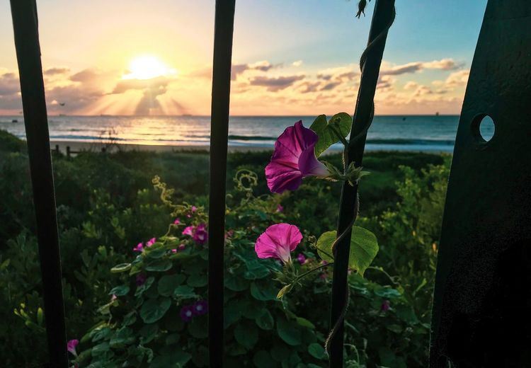 Climb your way up to get that shine in you Morning Sunrise Water Beauty In Nature Flowering Plant Flower Plant Sky Sea Nature Beach Horizon Horizon Over Water Tranquility Tranquil Scene No People Scenics - Nature Cloud - Sky
