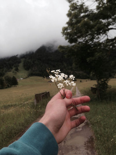 Cropped hand of person holding white flower against trees in foggy weather