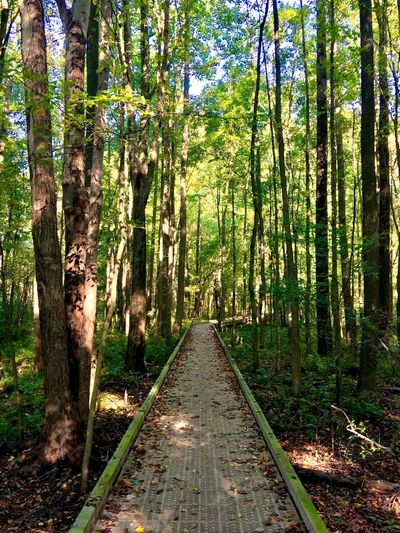Forest Path Forest WoodLand Green Outdoors No People Footpath Nature Walkway Beauty In Nature Pathway