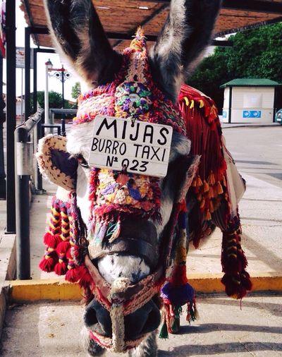 SPAIN Mijas
