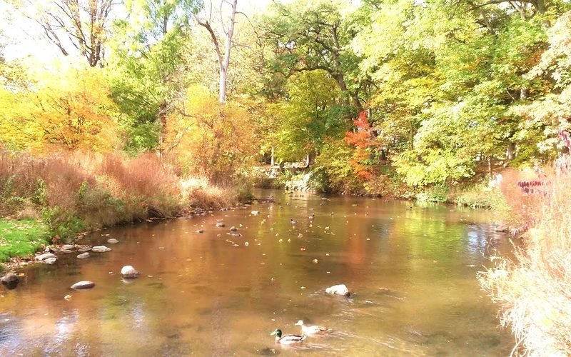 park days Ducks