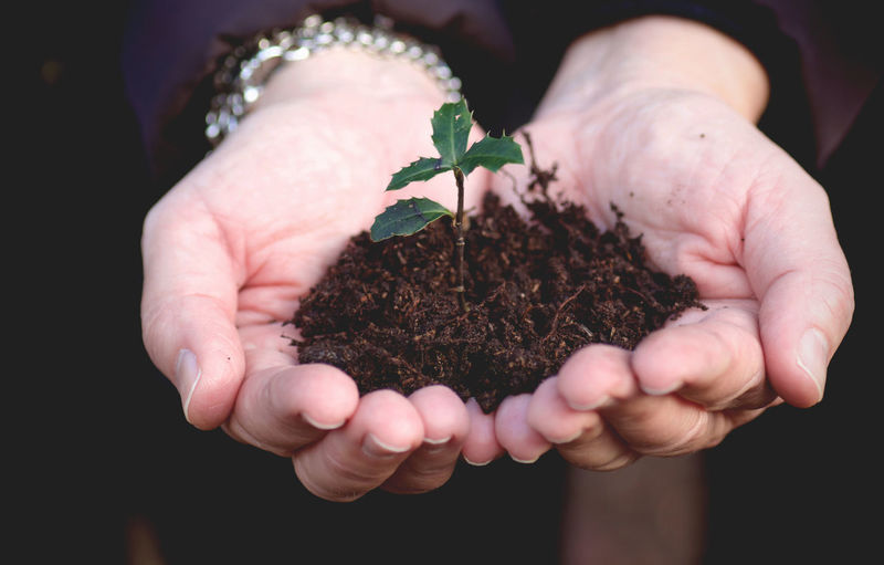 Cropped Image Of Hands Holding Seedling