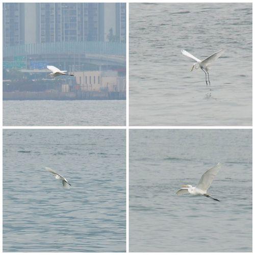 Birds Water Sea