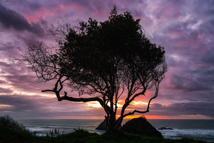 A tree looks over the Pacific at sunset. Sky Cloud - Sky Tree Beauty In Nature Sunset Water Tranquility Tranquil Scene Plant Scenics - Nature Silhouette Nature Sea No People Branch Idyllic Outdoors Land Growth