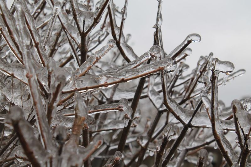 Snow Winter Cold Temperature Plant Tree Branch Frozen Focus On Foreground Tranquility Covering Day Outdoors Plant Stem Twig Bare Tree Ice No People Nature Close-up Icicle