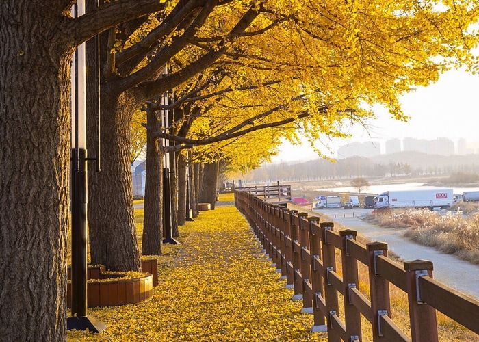 Autumn Tree Yellow Change Outdoors Nature Beauty In Nature Scenics No People Flower Branch Water Built Structure City Day Building Exterior Architecture Sky