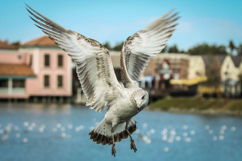 Animalia Bird