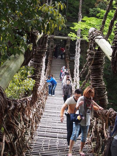 かずら橋。2014.4.30 Olympus Pen Travel 四国 Shikoku 旅 OlympusPEN Bridge