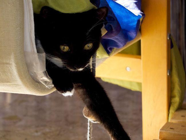 Kittel cat Omalé. Cats Cat