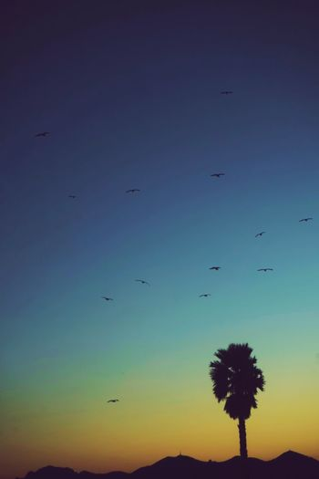 Palmtree in Cannes Flying Silhouette Sunset Sky Nature Bird No People Outdoors Beauty In Nature Animal Themes Scenics Day France Cannes Colorful Discover  Wanderlust Travel Summer Côte D'Azur Travel Photography Palm Tree Nature Peace Island