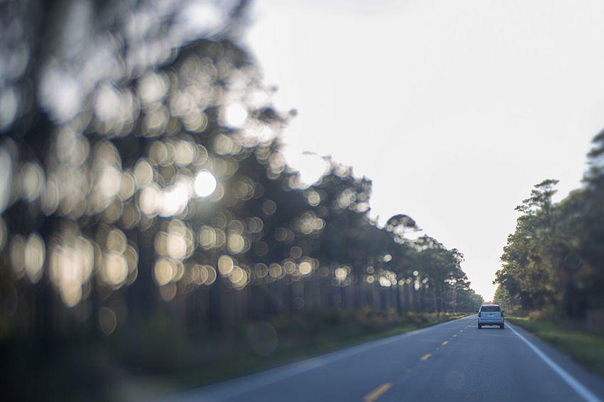beautiful straight ahead ❤️ Oak Tree Shutterbug Tomate_pauline Lensbaby  Edge50 EyeEm Best Shots Bokeh Photography Bokehlicious Bokeh Road EyeEm Gallery