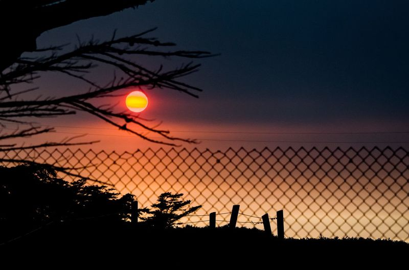 Silhouette plants and fence against sky during sunset