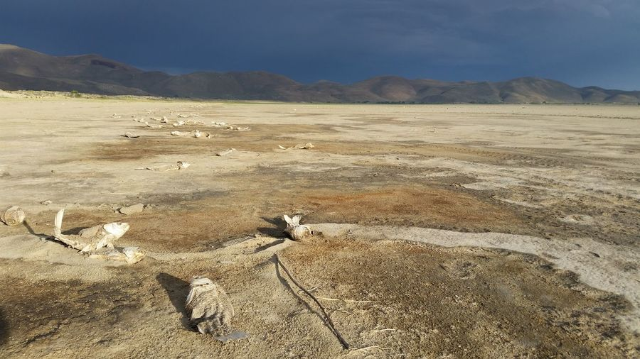 Dead Fishes In Dried Lake Against Cloudy Sky