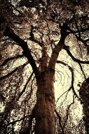 Blackandwhite Claunch 72 Monochrome Film Monochrome Bnw Eye4photography  Ee_daily Magical Trees