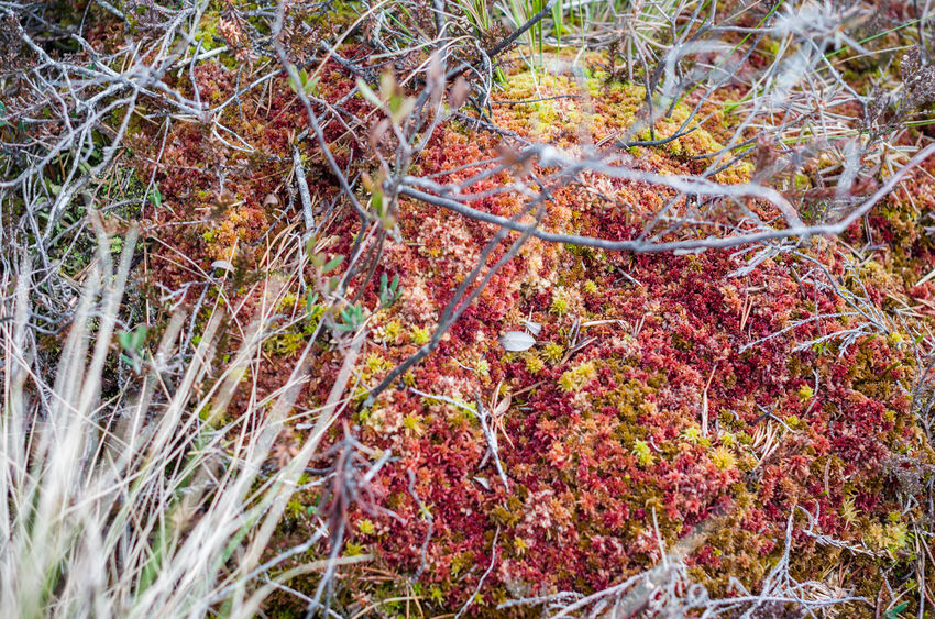 Colours in swamp Beauty In Nature Close-up Day Growth Nature No People Outdoors Plant Sphagnum Swamp
