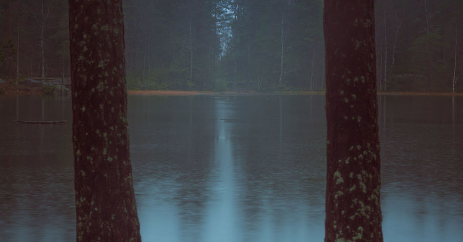 Moody forestscape in late autumn. Water Tree Tranquil Scene Tranquility Scenics - Nature Beauty In Nature No People Forest Nature Lake Reflection Land Non-urban Scene Outdoors WoodLand Trunk Idyllic Moody Moody Nature Rain WoodLand Panoramic Opening Between