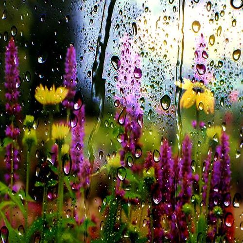 That Instant Of Rain That Invades You Of Peace ... Backgrounds Close-up Day Drop Fragility Freshness Full Frame Green Color Indoors  Multi Colored Nature No People Water Wet