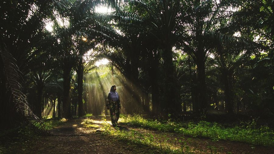 Morning At Oil Palm 43 Golden Moments Golden Nature Check This Out