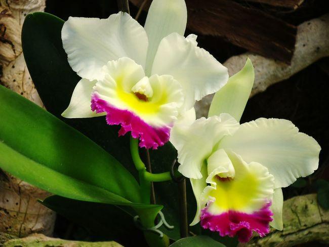 Orchidee. Orchidées Eyemphotography Flowers,Plants & Garden Natural Beauty Flowerporn Flower Collection Flower Photography