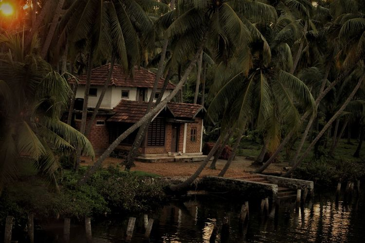 Palm trees by lake and building