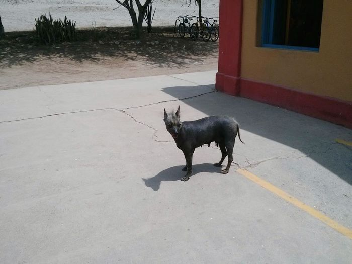Dog on parking lot