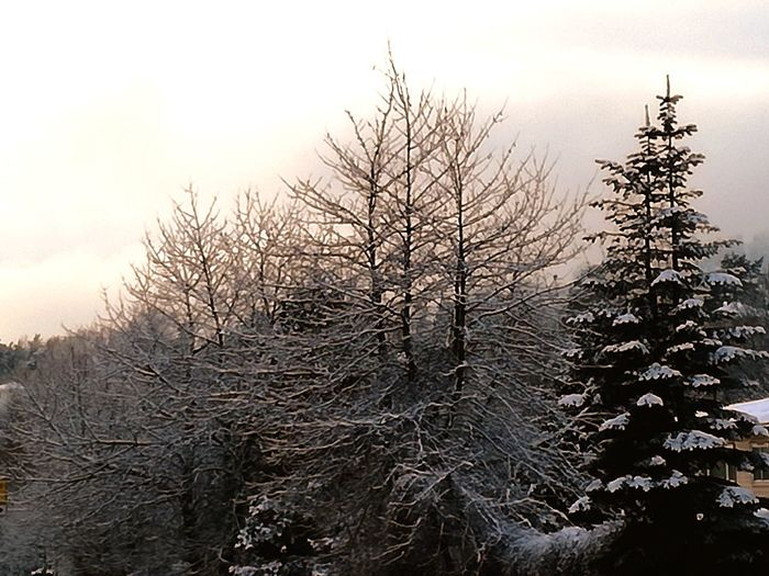 'King Winter's Cape' Winter Wonderland KJ✨ Bare Tree