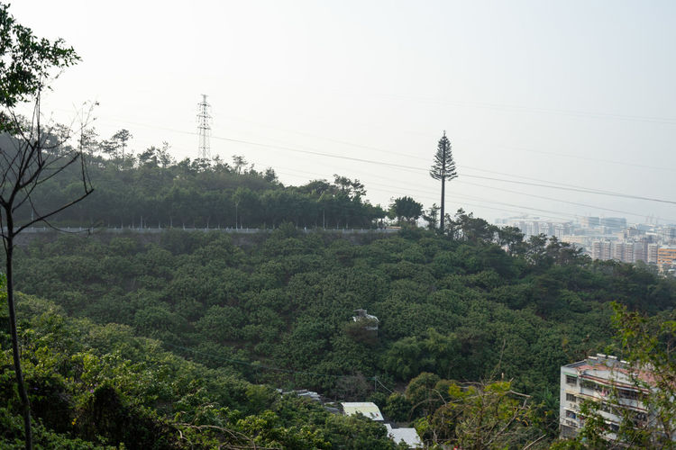 Scenic view of trees against clear sky