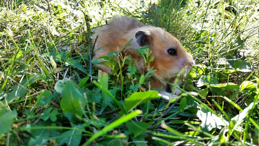 hamouflage Hamster My Hamster Pet Photography  Pet Love Cute Pets Cute Animals Pets