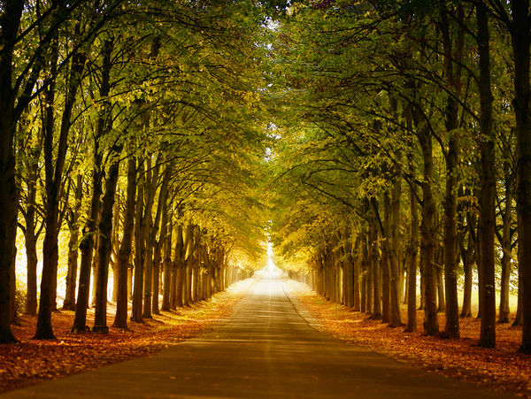 The Road. Beauty In Nature Autumn Landscape Lane Nature No People Outdoors Road Street Tree Autumn Colors Avenue Allee Perspective View