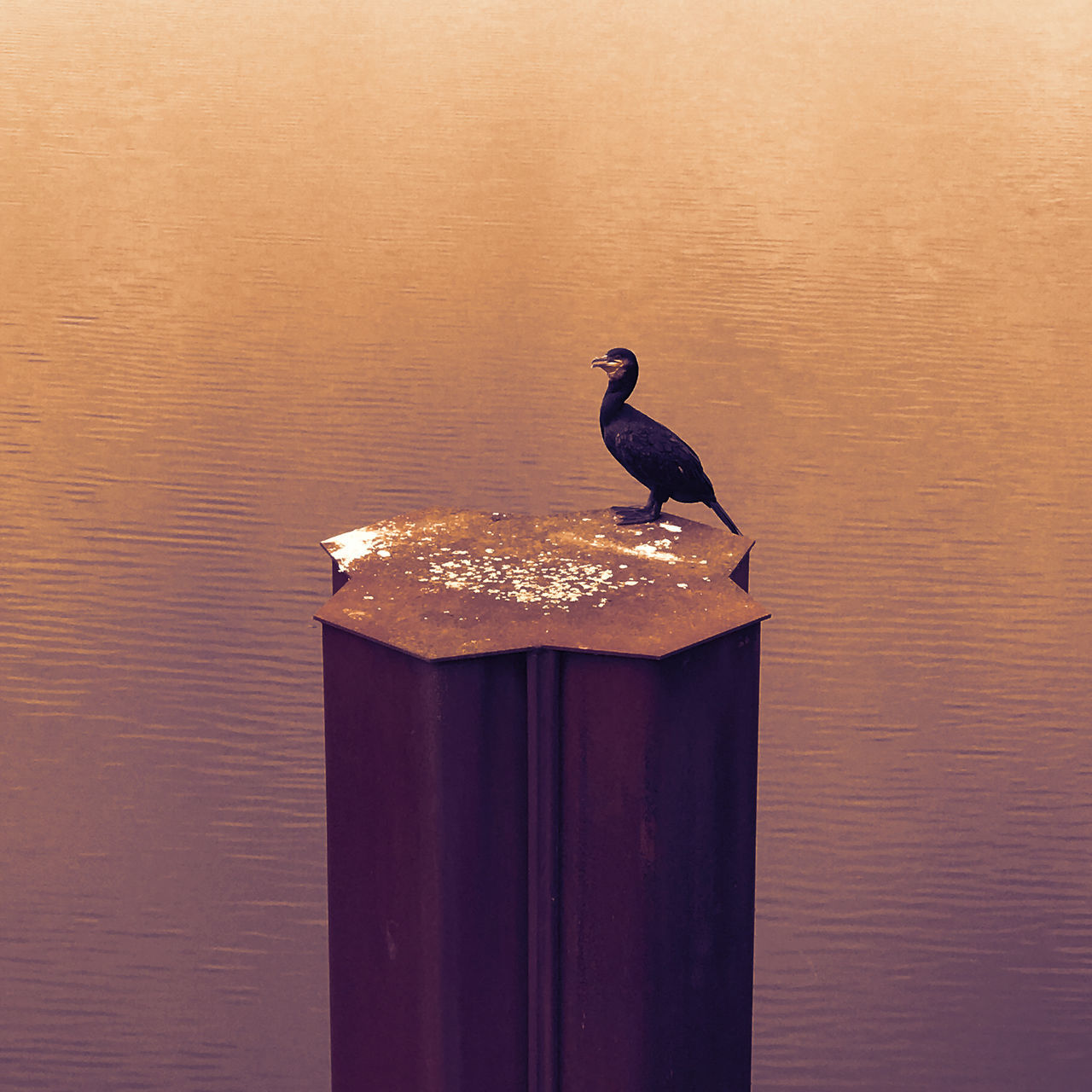 bird, animal themes, animals in the wild, perching, animal wildlife, no people, one animal, water, nature, day, close-up, outdoors