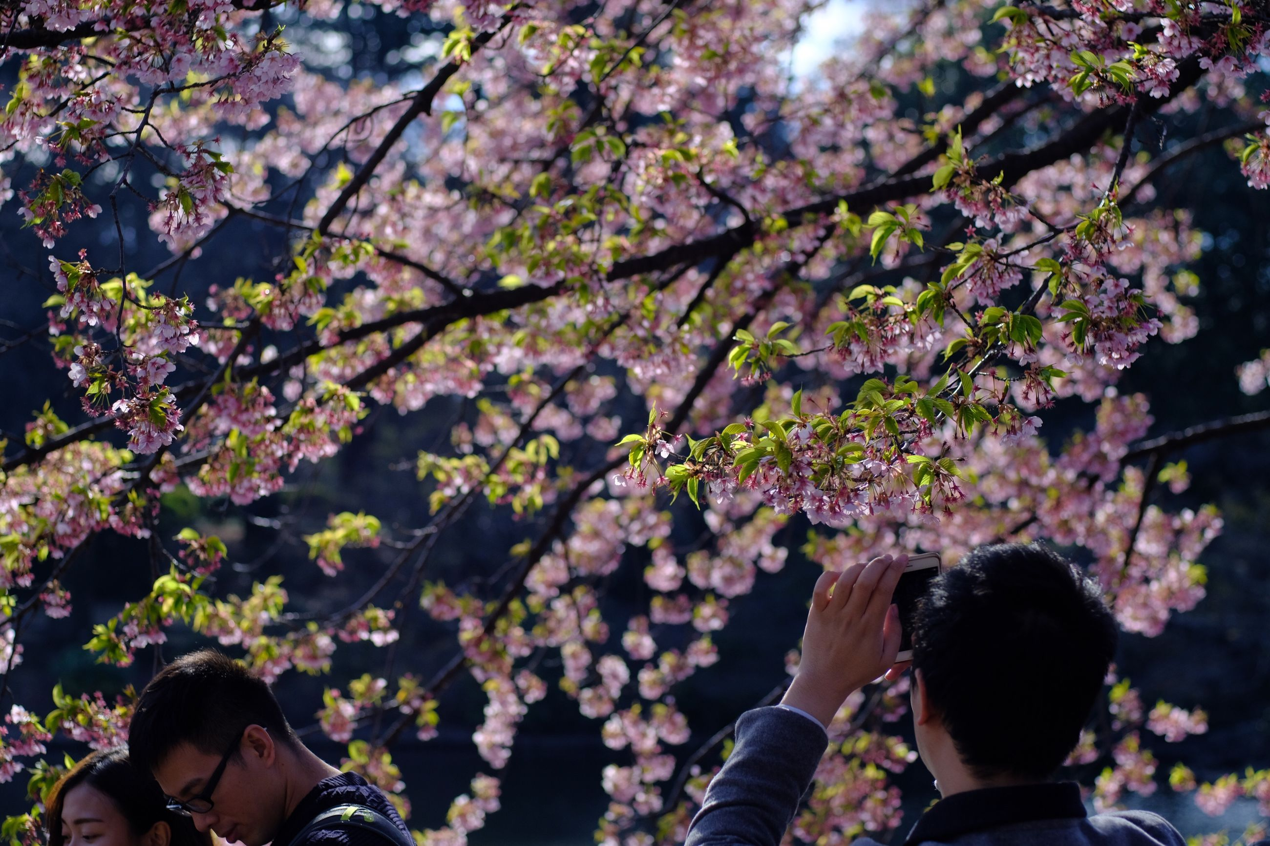 LOW ANGLE VIEW OF WOMAN AND FLOWERS ON TREE