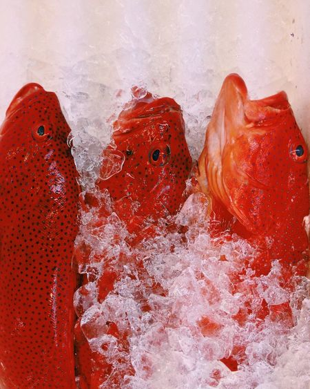 Red spotted fish amidst crushed ice at market