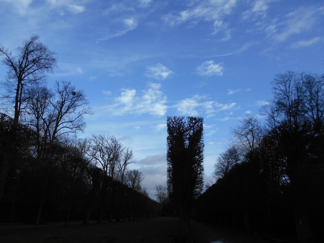tree, sky, nature, tranquility, beauty in nature, cloud - sky, tranquil scene, blue, silhouette, scenics, bare tree, no people, outdoors, landscape, day, growth