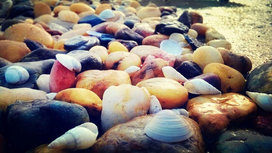 Sea Shells Stones And Shells Sea Stones Beautiful Sea Stones