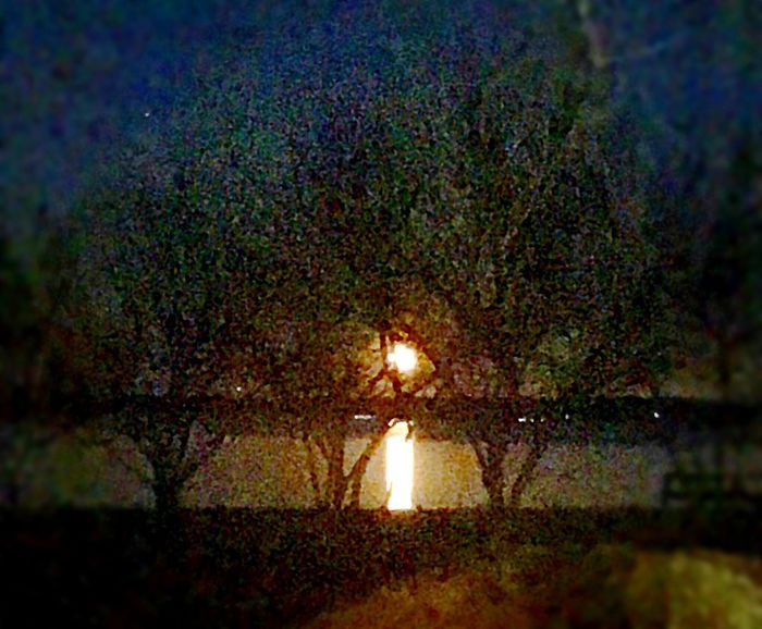 Rising Moon Moon Illuminated Nature Night No People Tree Outdoors Beauty In Nature Water Sky