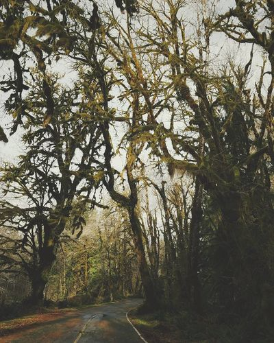 Tree Nature No People Outdoors Beauty In Nature Day Sky Pnwnaturescapes Rain Forest PNW