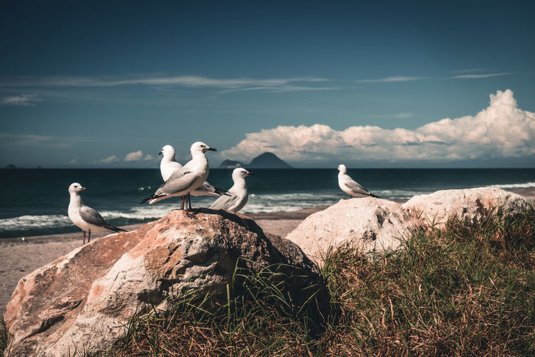 Some cheeky sea gulls on a beach in new zealand