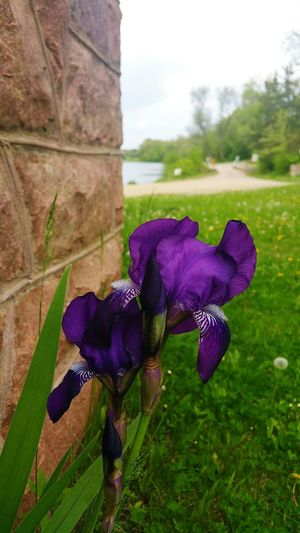 Irisflower Splitrockpark Garretson Water_collection Waterphotography Flowerphotography Flowerlover