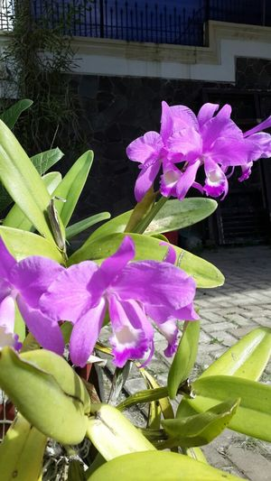 Beauty catelya. Natural Taking Photos MacroCliqueGallery Streamzoofamily