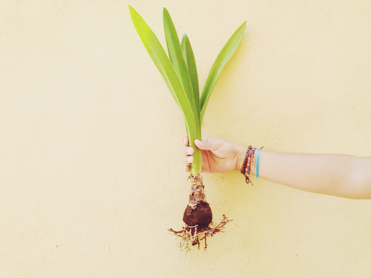 Cropped hand holding plant against wall