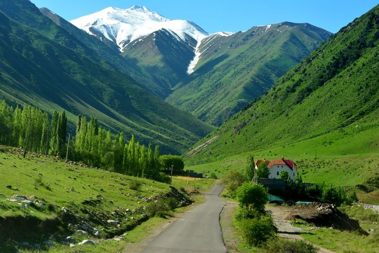 Kyrgyzstan Tree