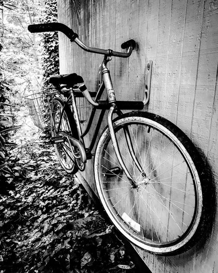 Iphoneytogtaphy Bycycle And Ivy In Black And White